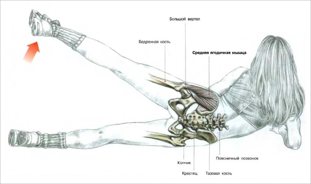 Боль в соединении ноги с тазом. Тендинит способен поразить и тазобедренный сустав. Виды тендинита ТБС