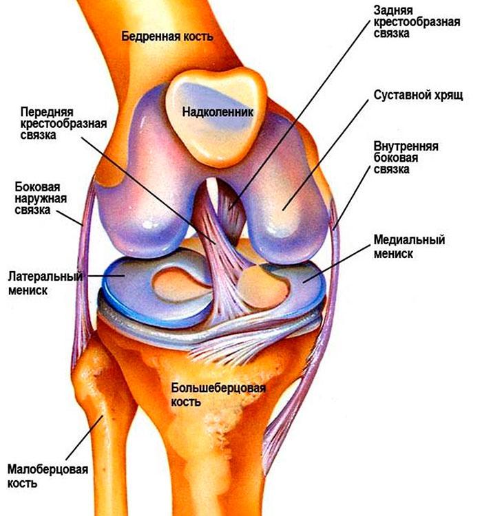 a csípőízület hemarthrosisa