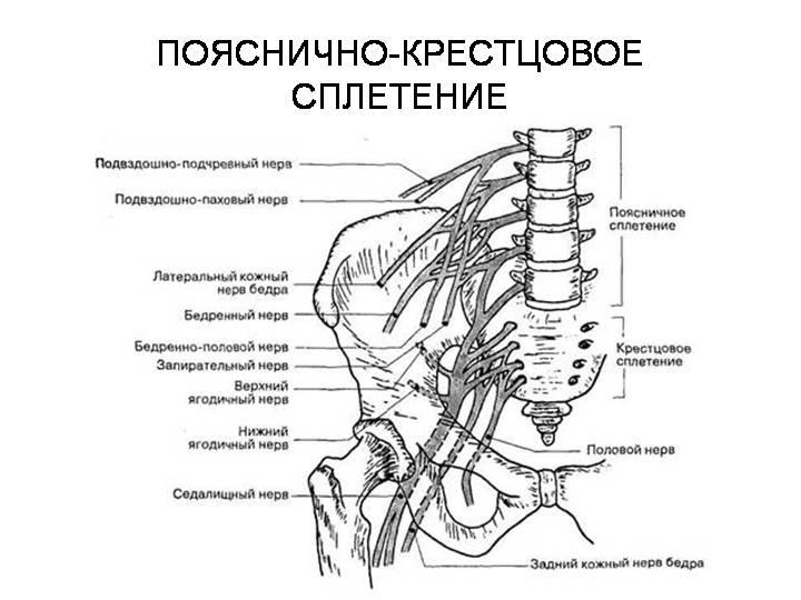 Нейропатия бедренного нерва. Симптомы поражения бедренного нерва